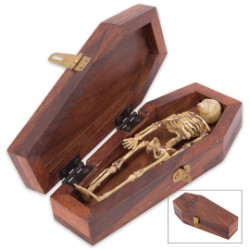 Wooden Coffin And Skeleton