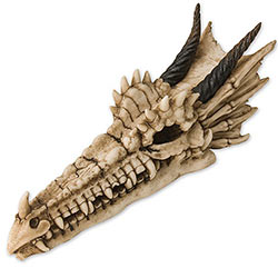 Wall Mounted Dragon Skull Display